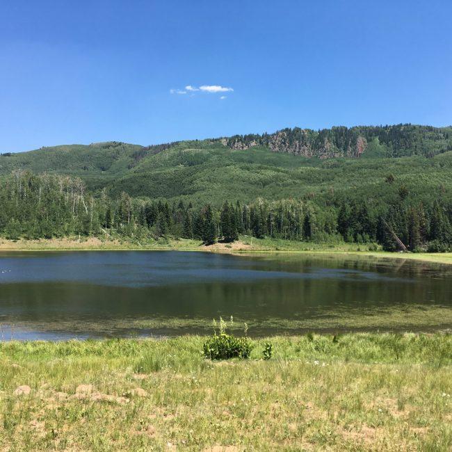 Buckles and Harris Lake Trail